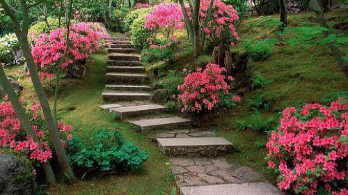 fotos de um jardim floridoSaiba o que plantar para ter mais flores na