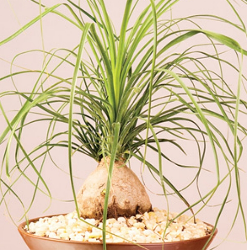 Conheça 15 plantas fáceis de cultivar e duras de matar  Plantas