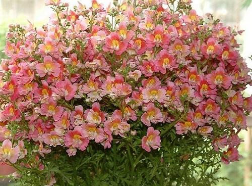 Conhe a cinco flores que resistem ao tempo seco londrina for Plantas decorativas resistentes