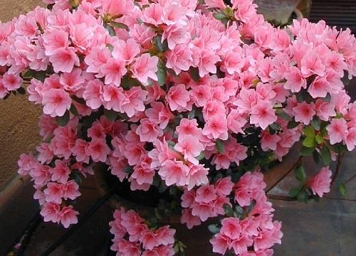 Conheça cinco flores que resistem ao tempo seco  Londrina  Casa e