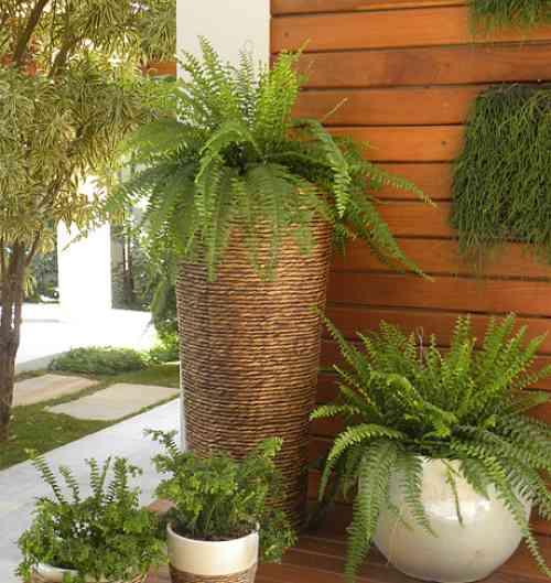 Plantas que j fizeram sucesso agora voltam aos jardins for Plantas decorativas resistentes