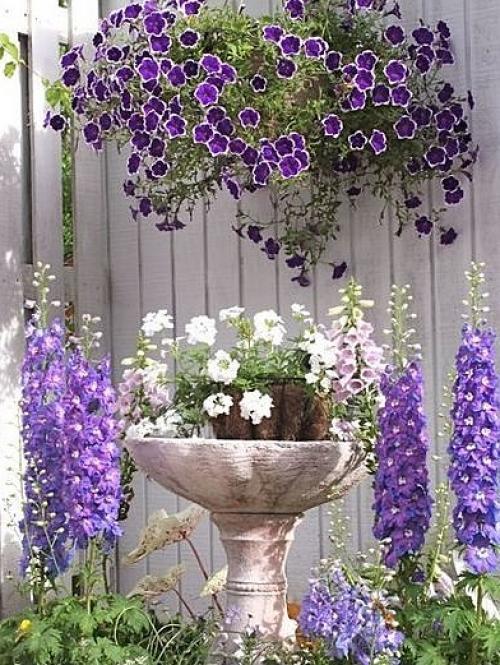 flores para jardim verao : flores para jardim verao:Flor do verão: renda-se à beleza e encanto das coloridas petúnias