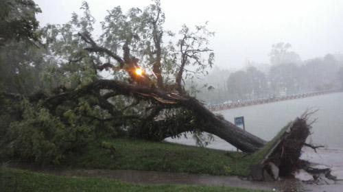 Everson Alves/Bonde Repórter - O leitor Everson Ferreira Alves registrou uma árvore que teve a raiz arrancada na barragem do Igapó