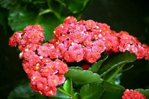 plantas de jardim que gostam de umidade : plantas de jardim que gostam de umidade:Conheça e saiba como cuidar de 11 plantas se adaptam ao clima quente