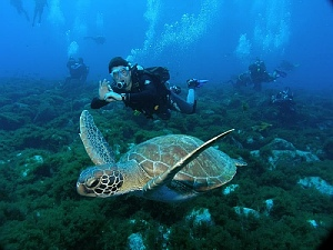 Paisagens aqu�ticas: conhe�a os sete melhores pontos para mergulhar no Brasil