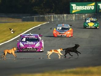 Cachorros invadem pista em Curitiba e assustam pilotos