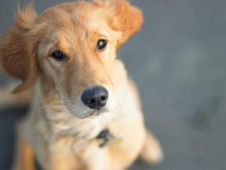 Projeto permite afastamento do trabalho por morte de animal de estimação