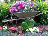 Onze verdades sobre jardinagem que voc� precisa saber