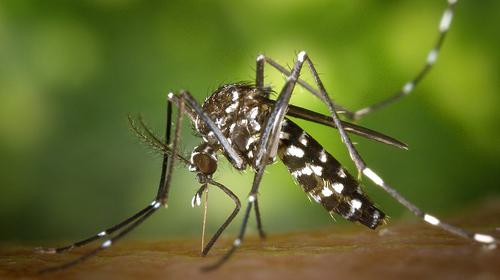 Londrina participa do Dia Nacional de Combate ao Aedes aegypti
