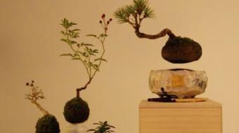 Designers japoneses criam o primeiro 'bonsai flutuante'