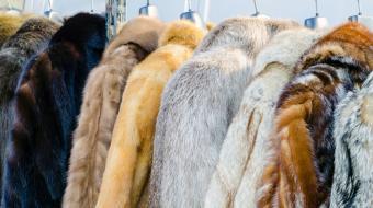 PETA vira acionista da Prada para garantir que marca n�o use pele animal