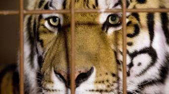 Saiba quais s�o as atra��es mais cru�is do mundo envolvendo animais silvestres