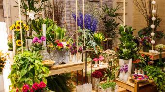 Mais de 300 mil turistas s�o esperados para a festa das flores em Holambra