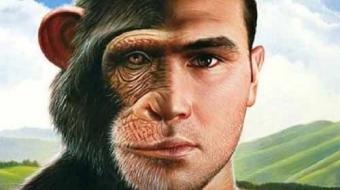 Estudos revelam que homem herdou viol�ncia letal de ancestrais primatas
