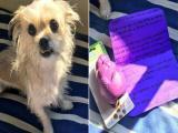 Cachorra destr�i o cart�o de cr�dito do dono e recebe uma surpresa do banco