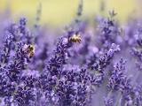Saiba quais s�o as flores ideais para as esta��es mais quentes do ano