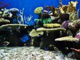 AquaRio: um aqu�rio para acabar com o medo de tubar�o