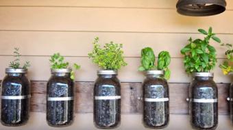 Jardins verticais podem fazer toda a diferen�a na decora��o
