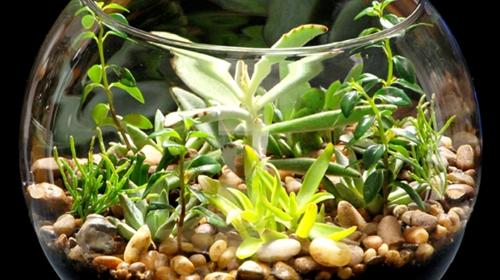 mini jardim curitiba:Como fazer um mini jardim no aquário – jardim – Casa e Decoração