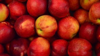 Alimentos que inibem a fome e fazem bem ao seu corpo