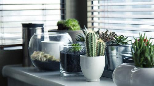 Plantas para ter boas energias em 2017 confira cactos - Cactus da interno ...