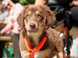 Treine seu cão em casa com apenas trinta minutos por dia; aprenda!