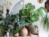 Deixe a casa mais aconchegante com plantas