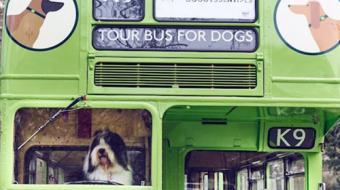 Londres recebeu o primeiro ônibus turístico para cachorros