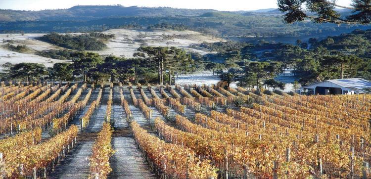 vinhos de altitude