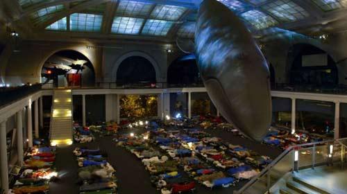 Divulgação/Museu de História Natural