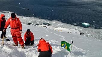 Cientistas estudam fungos da Antártica em busca de medicamento contra dengue