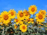 Flores no caminho: conheça destinos nacionais que são floridos o ano todo