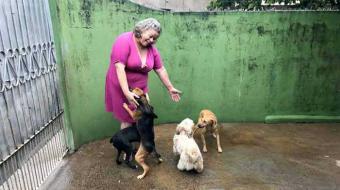 Cães são envenenados no centro de Londrina