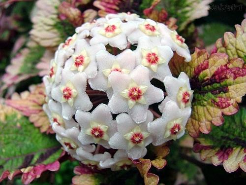 Aposte nas miniflores para dar mais beleza ao seu jardim  Casa e