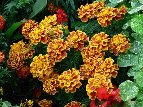 flores jardim de sol : flores jardim de sol:Aposte nas miniflores para dar mais beleza ao seu jardim – Casa e